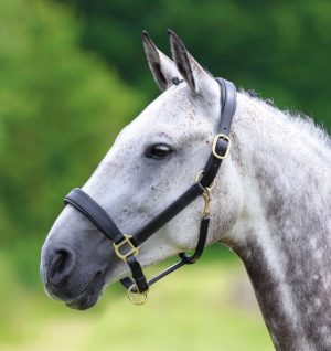 Blenheim Leather Travel Headcollar