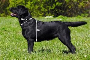 Dog Towelling Coat
