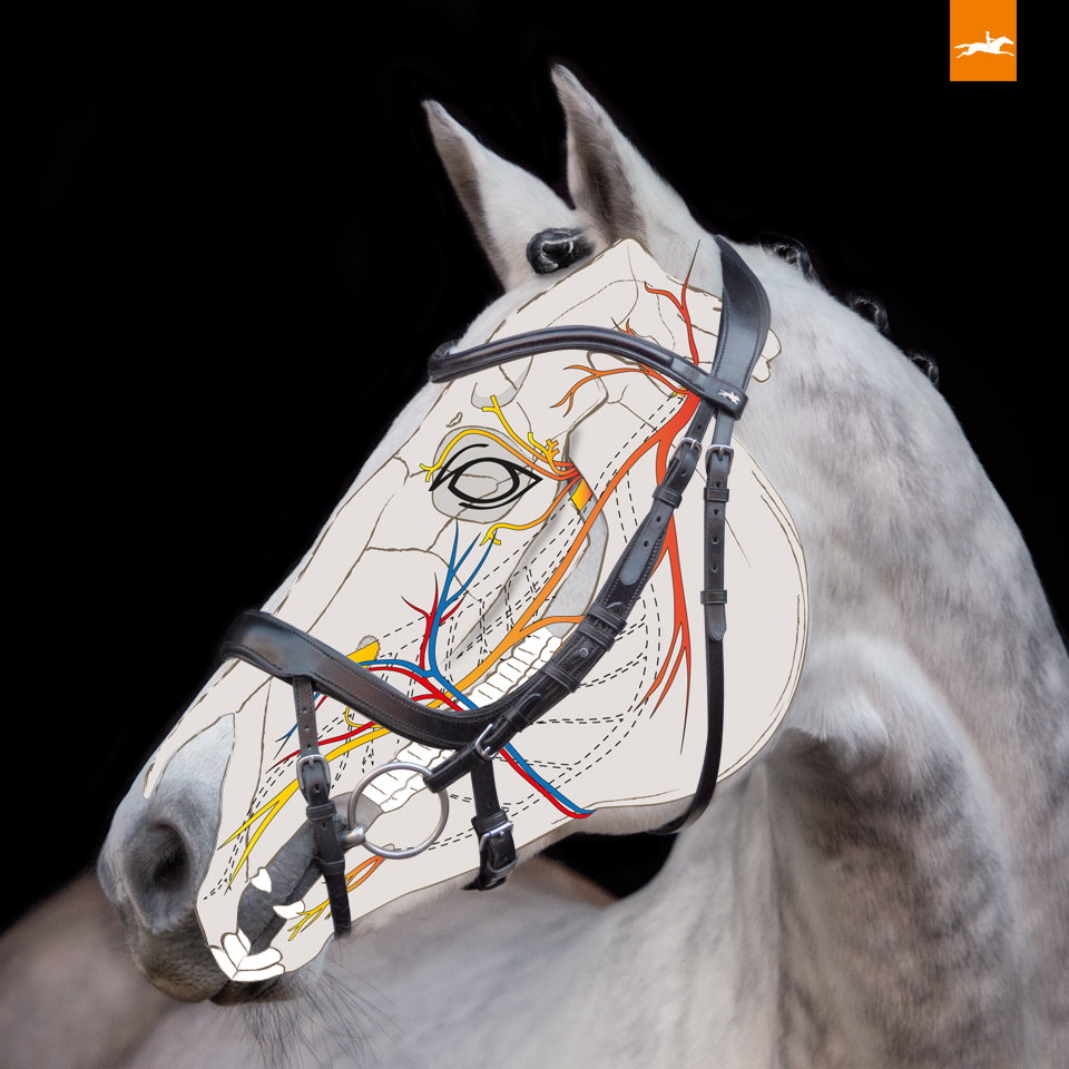 Schockemohle Equitus Beta Anatomical Bridle