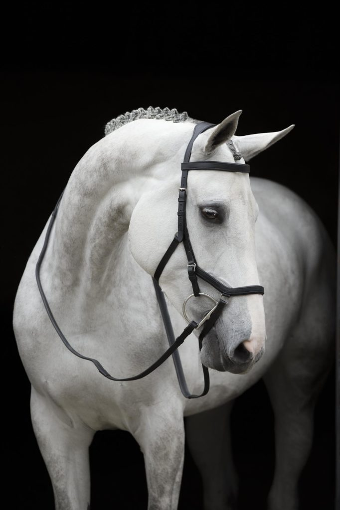 Micklem Competition Bridle