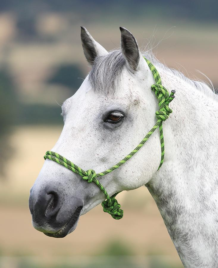 Rope Control Headcollar