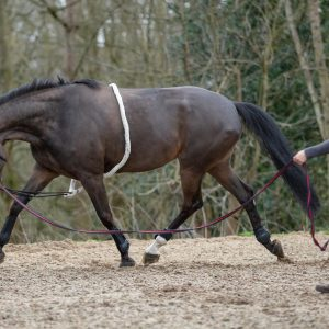 Mark Todd Lunging Aid